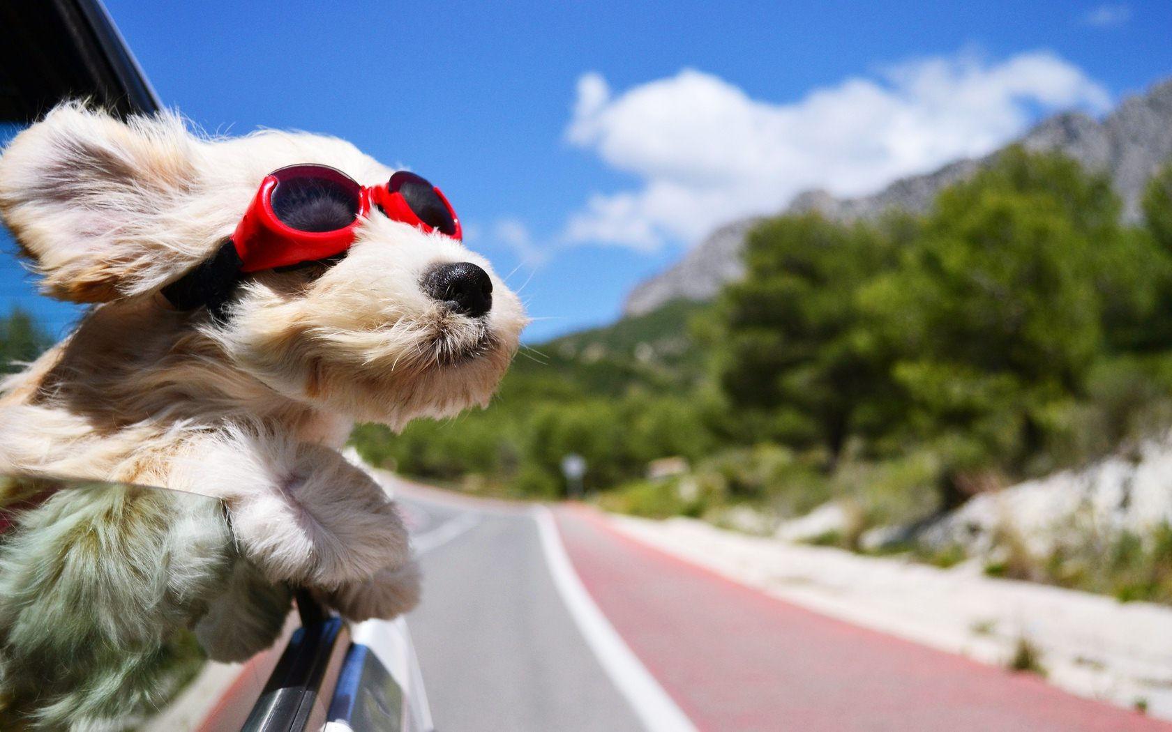 vacanze con il cane
